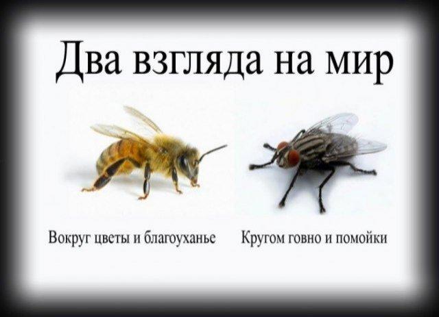 http://www.stihi.ru/pics/2014/06/20/4509.jpg