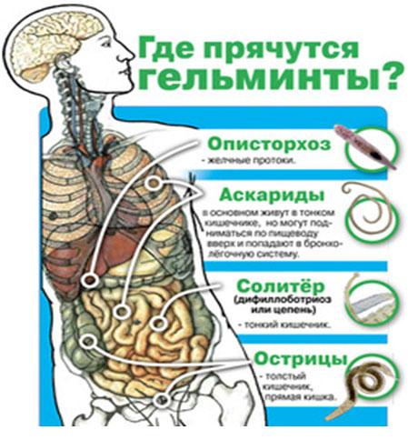 что любят паразиты и грибы в человеке