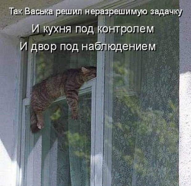 Летием девушке, смешные картинки о окнах