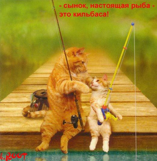 помоги котам рыболовам поделить улов
