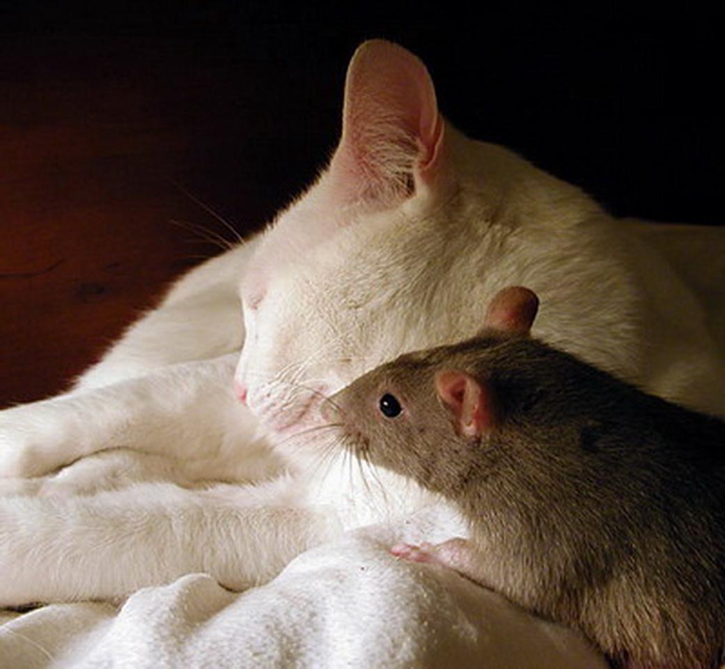 Картинки кошки и мышки вместе, картинки морем открытки