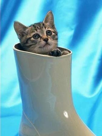 Кот и сапоге стихи
