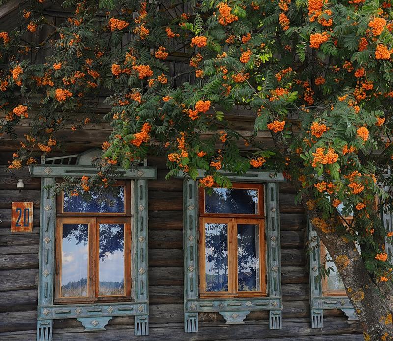 Посадка дерева под окном