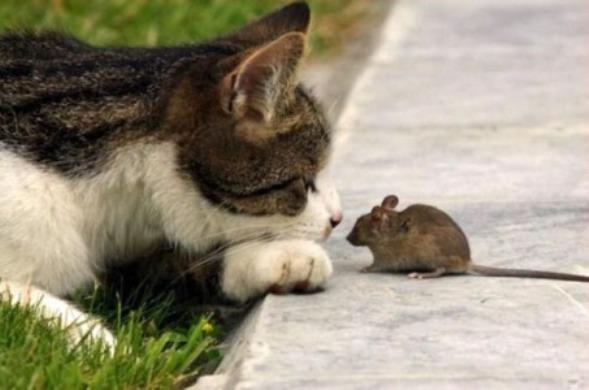 как выбрать кота который будет ловить мышей