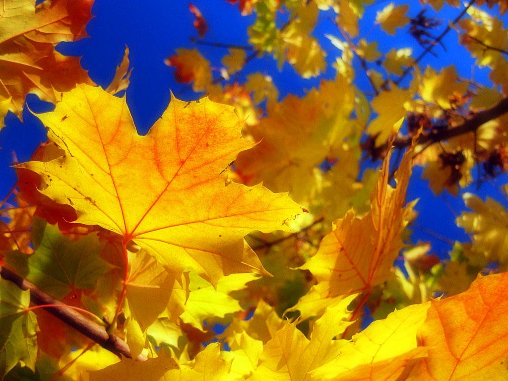 Картинки бабье лето осень