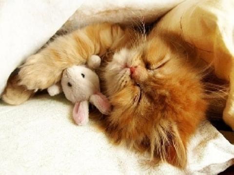 Рыжий кот любовь