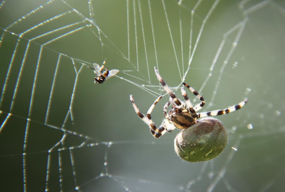 как выкувать из метала паука земле любовь Нас
