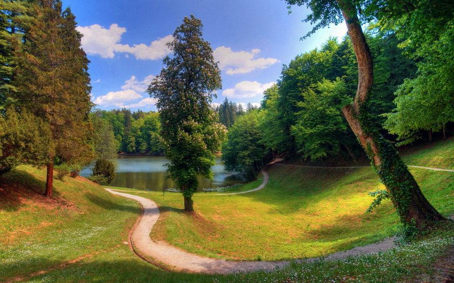 картинки на рабочий стол лето природа лес № 488995 без смс
