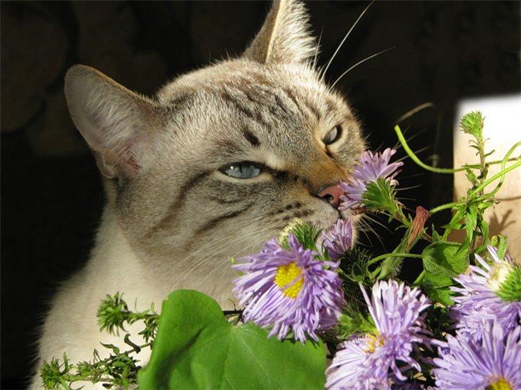 Кот и цветок стихи