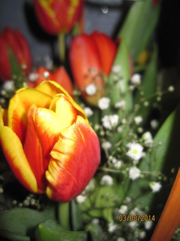 Без повода цветы стихи