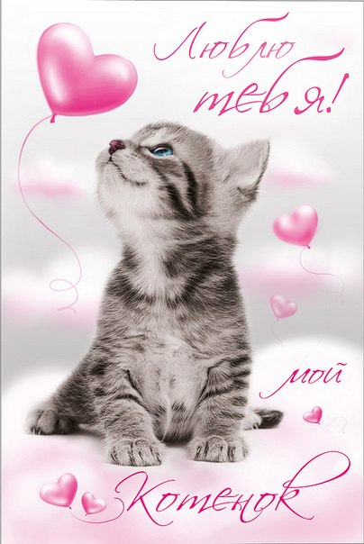 Картинки я тебя люблю с котятами