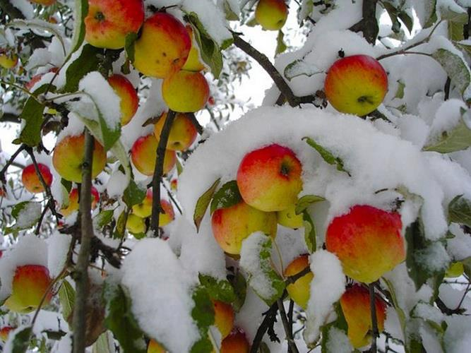 банку к чему цветет яблоня осенью приметы Марина Софьянчук