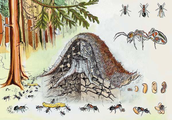 Картинка про муравейник