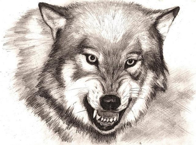 Тату эскизы волка оскал