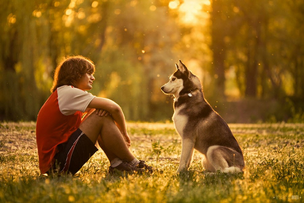 Контакте, собака друг человека в картинках