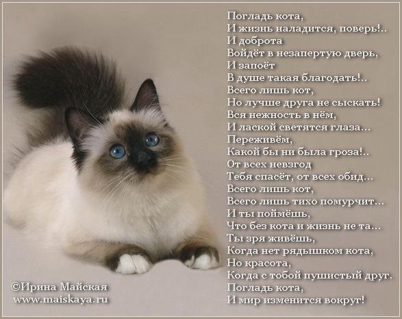 стихи про котика любимого рад, рад