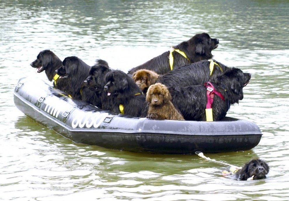 фильм в лодке с животными
