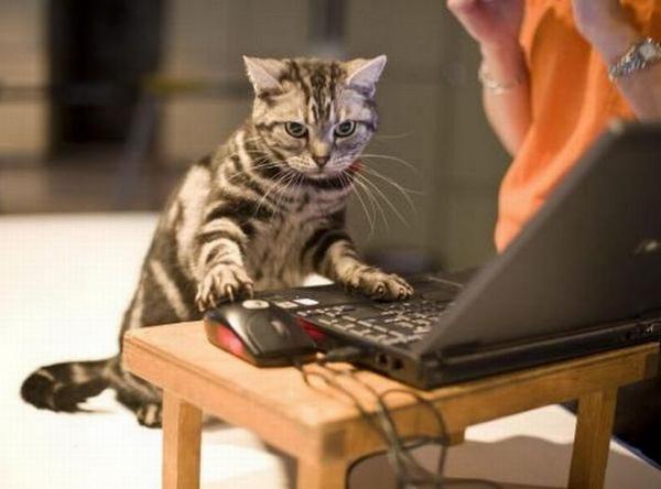 День программиста открытки с котом, текстом омар хайям