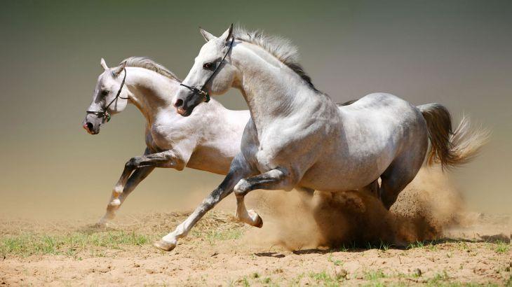 Білий кінь працює hd шпалери 1920x1080