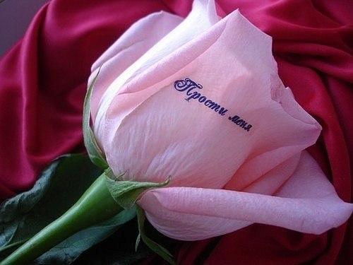 Фото цветы прости