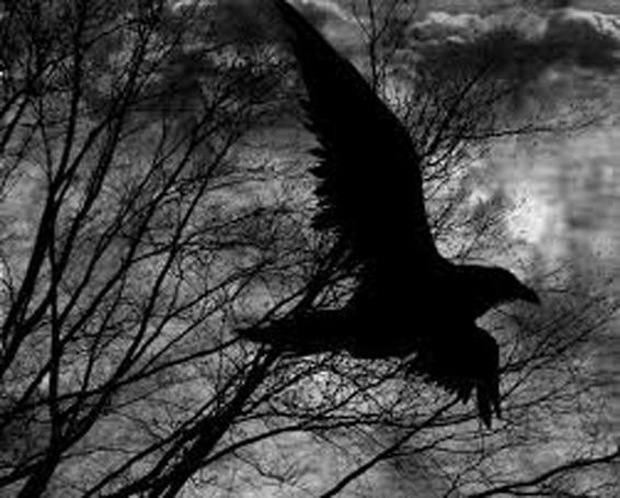 скачать торрент черный ворон - фото 5