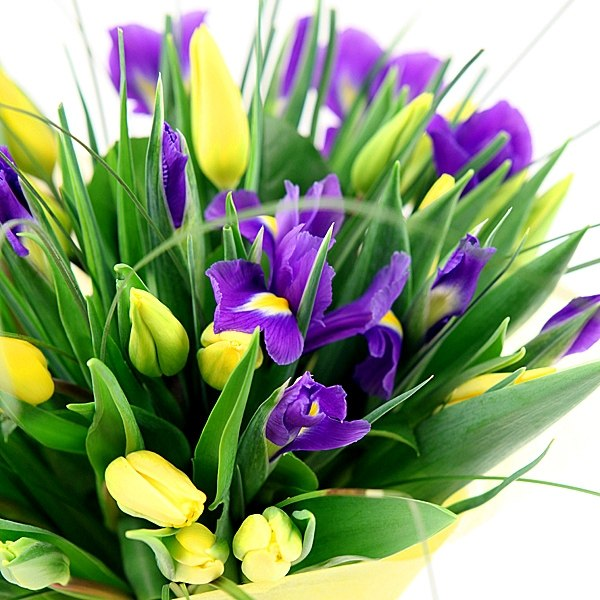 Открытки с днем рождения женщине красивые с ирисами, поздравление сыночка днем