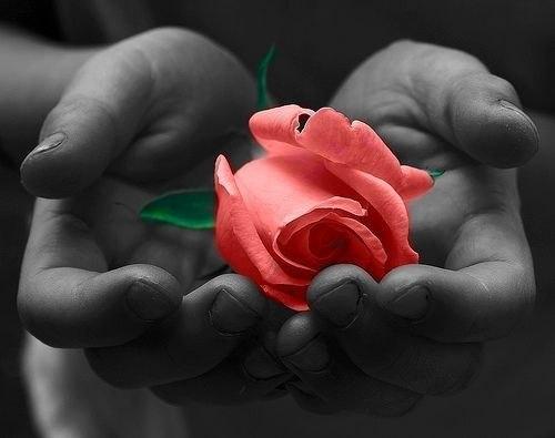 Цветы надежда