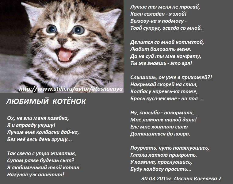 Стих любимому котенку