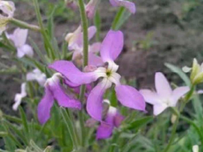 Цветы записи в рубрике цветы шестакова : liveinternet - росс.