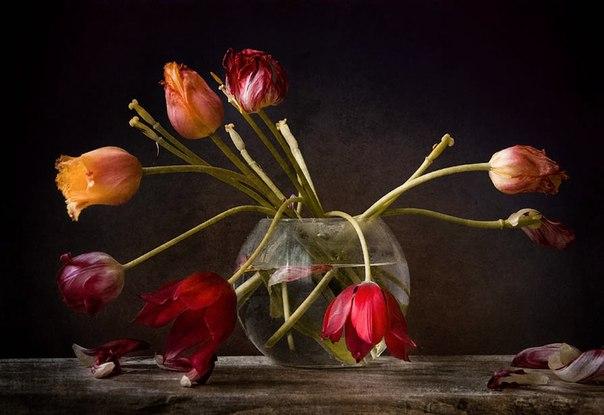 тюльпаны увядшие фото