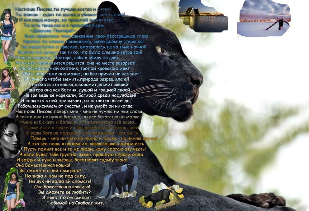 Картинки пантеры с девушкой на природе