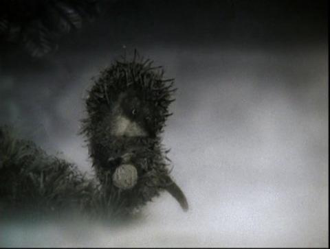 Наш личный ёжик в тумане