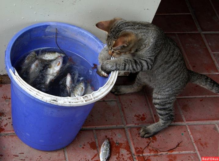 детей мискм стоят рядом с мусорным ведром у кошки они только количеством