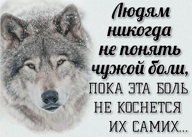 Днем, картинки с волками и надписями про жизнь со смыслом новые 2019