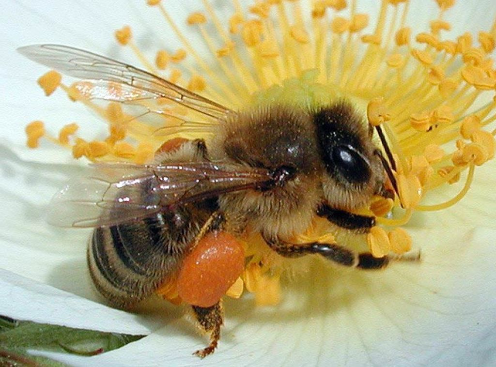 все фото уставшей пчелки недавно открыли