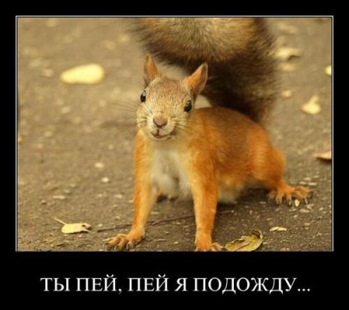 http://www.stihi.ru/pics/2015/08/13/2966.jpg