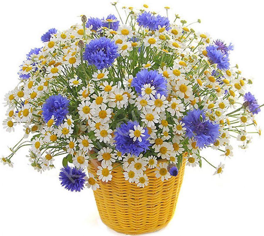 Открытка с полевыми цветами с днем рождения женщине