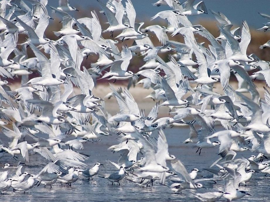 лететь без шума ловить рыбу