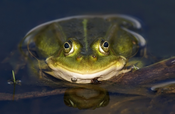 ловить лягушку в воде