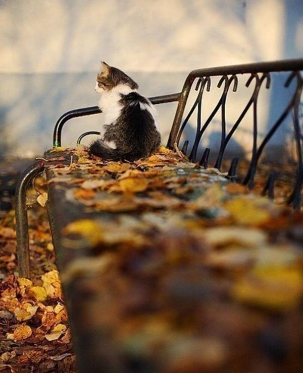 Смешные картинки настроение осень, кристина