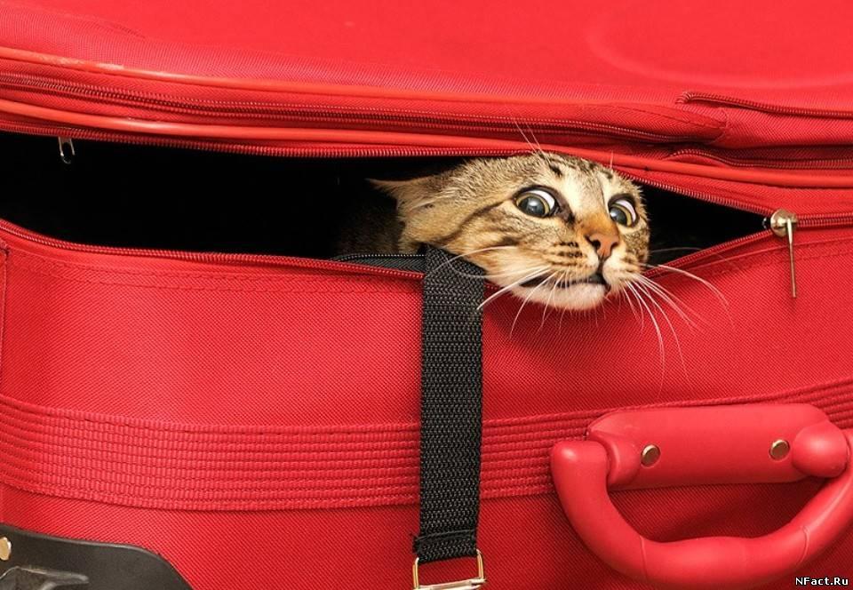 Ретро, смешные картинки чемоданное настроение
