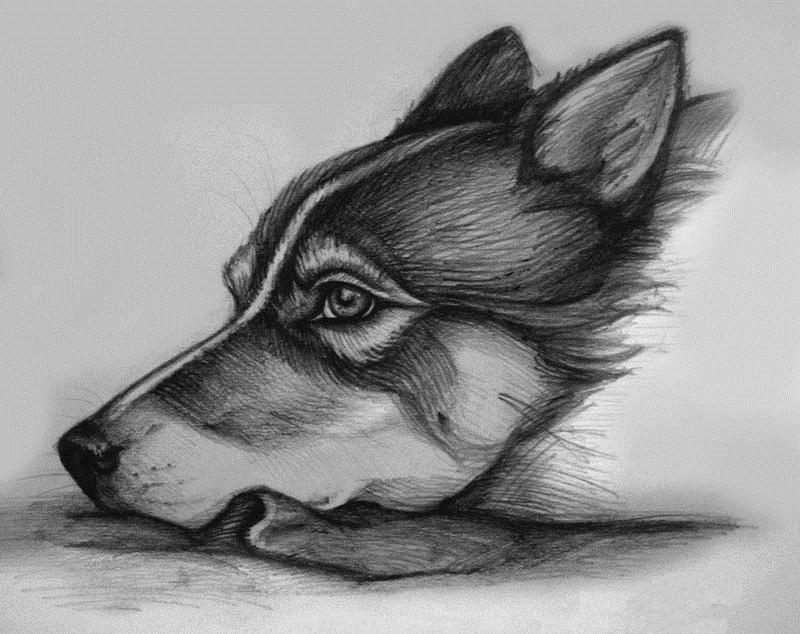 Овал лица, картинки грустные животные нарисованные