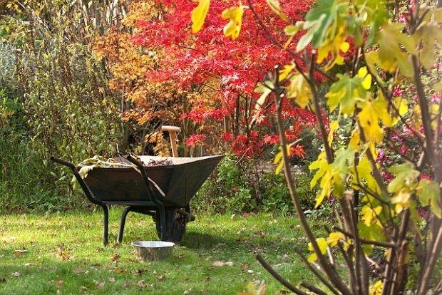 картинки осень в огороде на рабочий стол