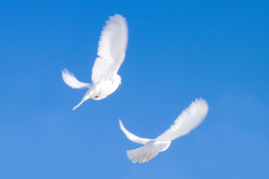 Белые птицы открытки