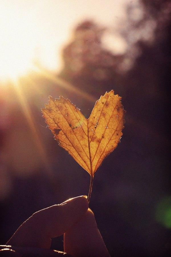 Осень и любовь картинки на аватарку
