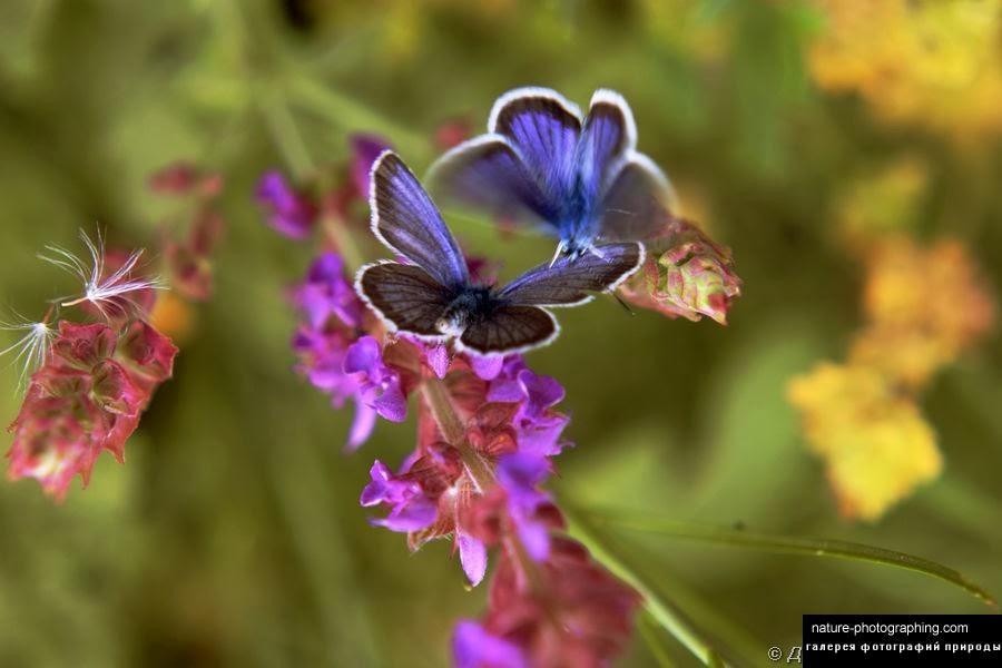 Скачать песню а ты танцуй бабочка