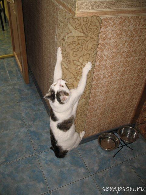 Как сделать когтеточку на стену для кошки своими руками фото пошагово