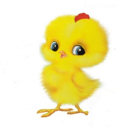 Цыпленок  с детьми