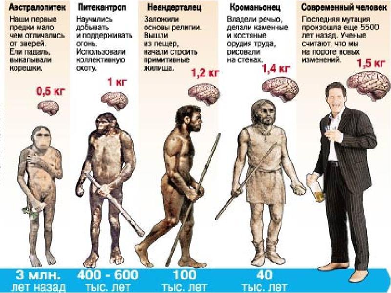 Схема от древнего человека к современному