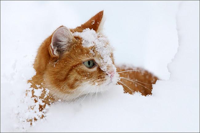 Первый снег и котенок (Анна Гетьман) / Стихи.ру